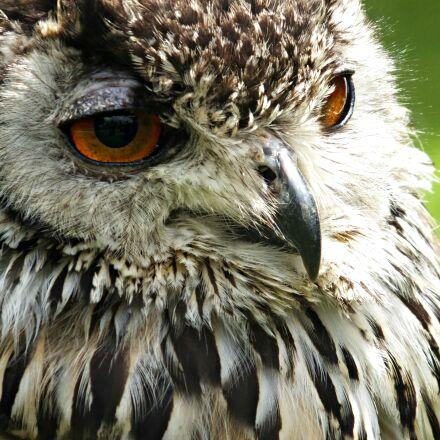 nature, owl, macro, feathers, Fujifilm FinePix F900EXR