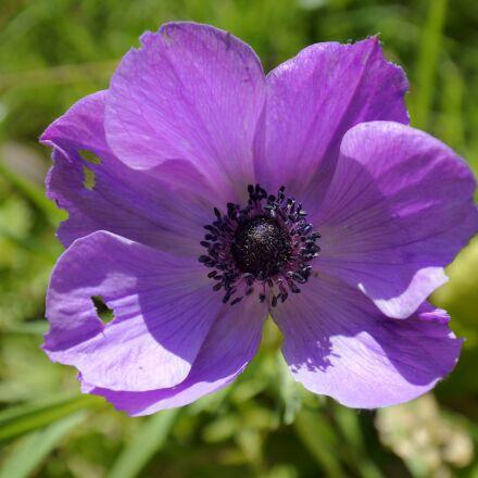 beautiful flowers, flower, purple, Nikon 1 J5
