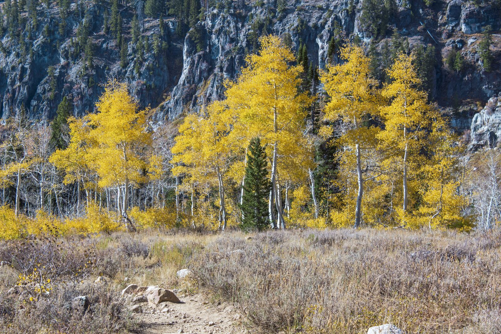 "Canon EOS 600D (Rebel EOS T3i / EOS Kiss X5) sample photo. ""Aspens, trail, autumn"" photography"