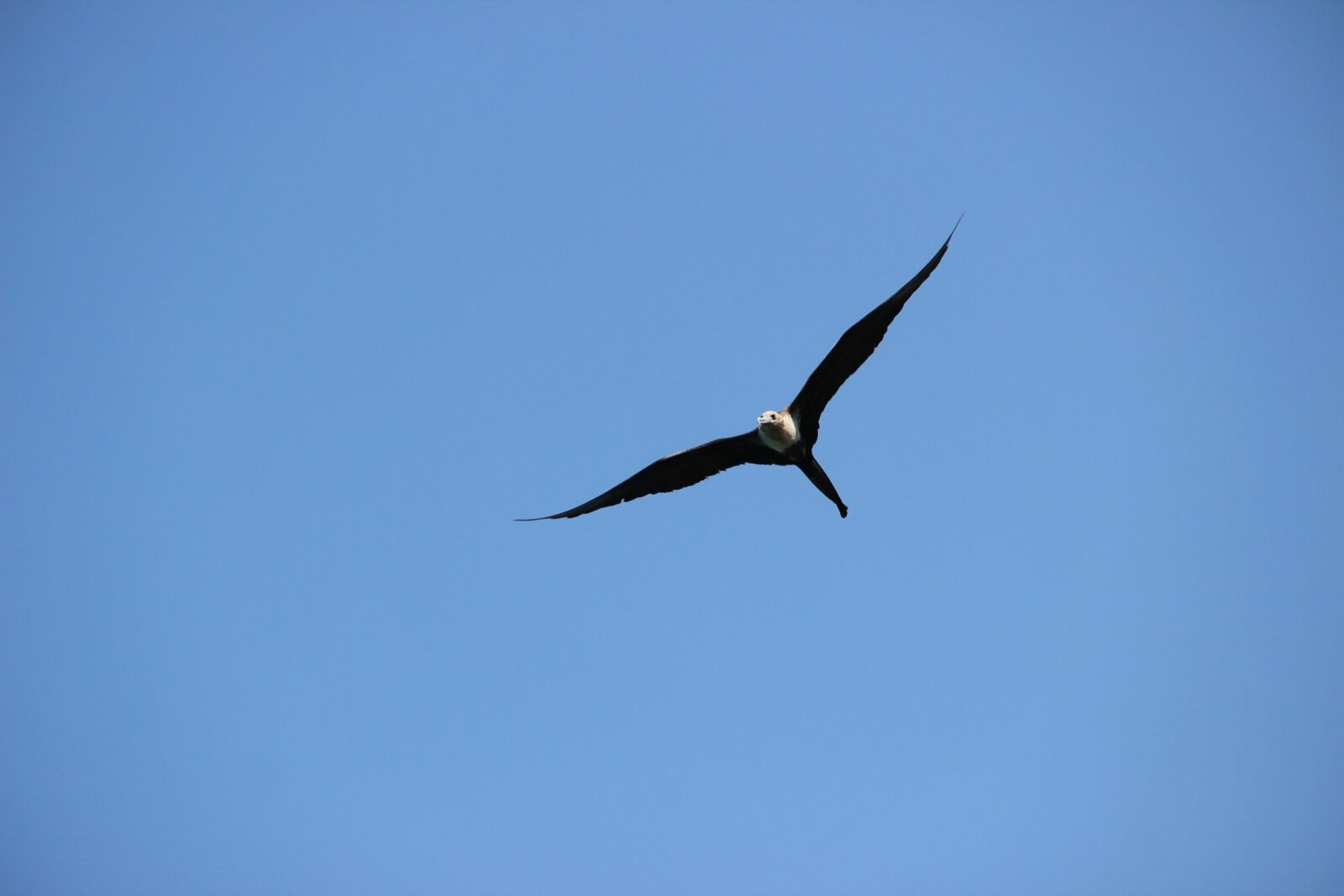 "Canon EOS 600D (Rebel EOS T3i / EOS Kiss X5) sample photo. ""Seagull, flight, bird"" photography"