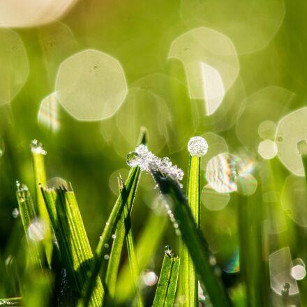 bokeh, dewdrop, frozen morning, Canon EOS 750D