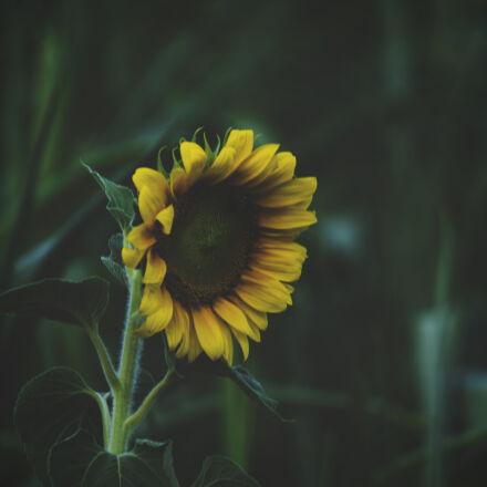 beautiful, blooming, blossom, blur, Samsung NX2000