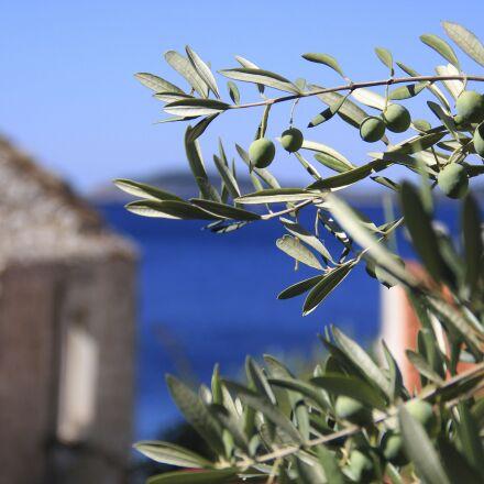 olives, croatia, sea, Canon EOS 550D