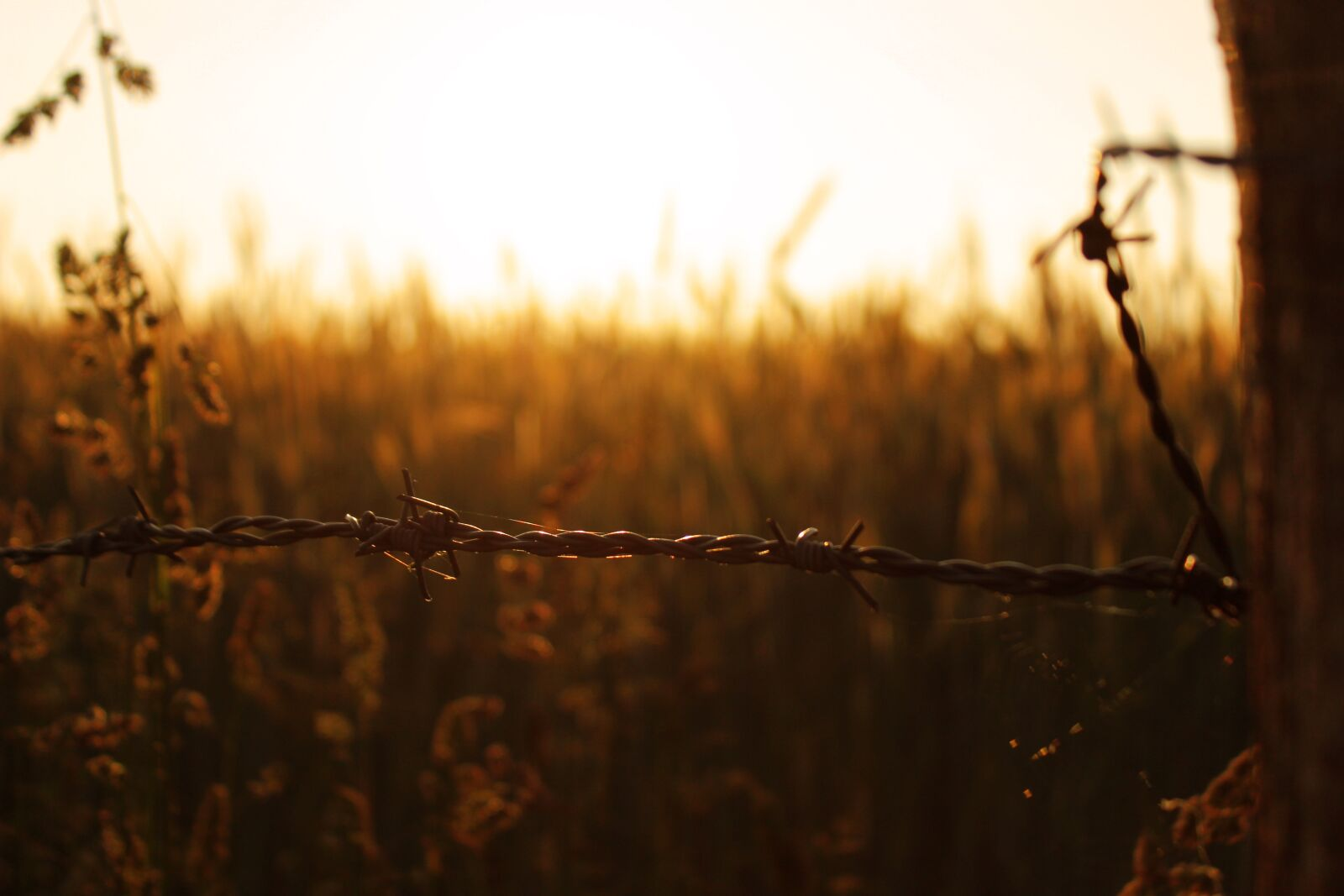 """Canon EOS 600D (Rebel EOS T3i / EOS Kiss X5) sample photo. """"Barbed wire, fence, cornfield"""" photography"""