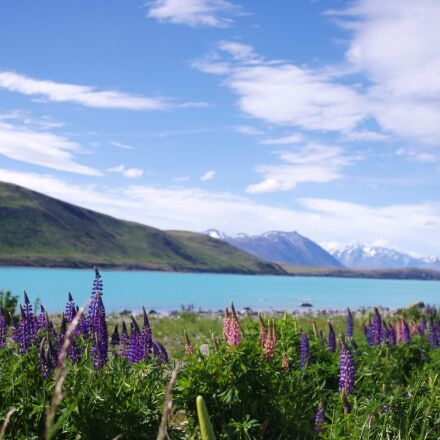 nature, sky, flowers, blue, Pentax K-X