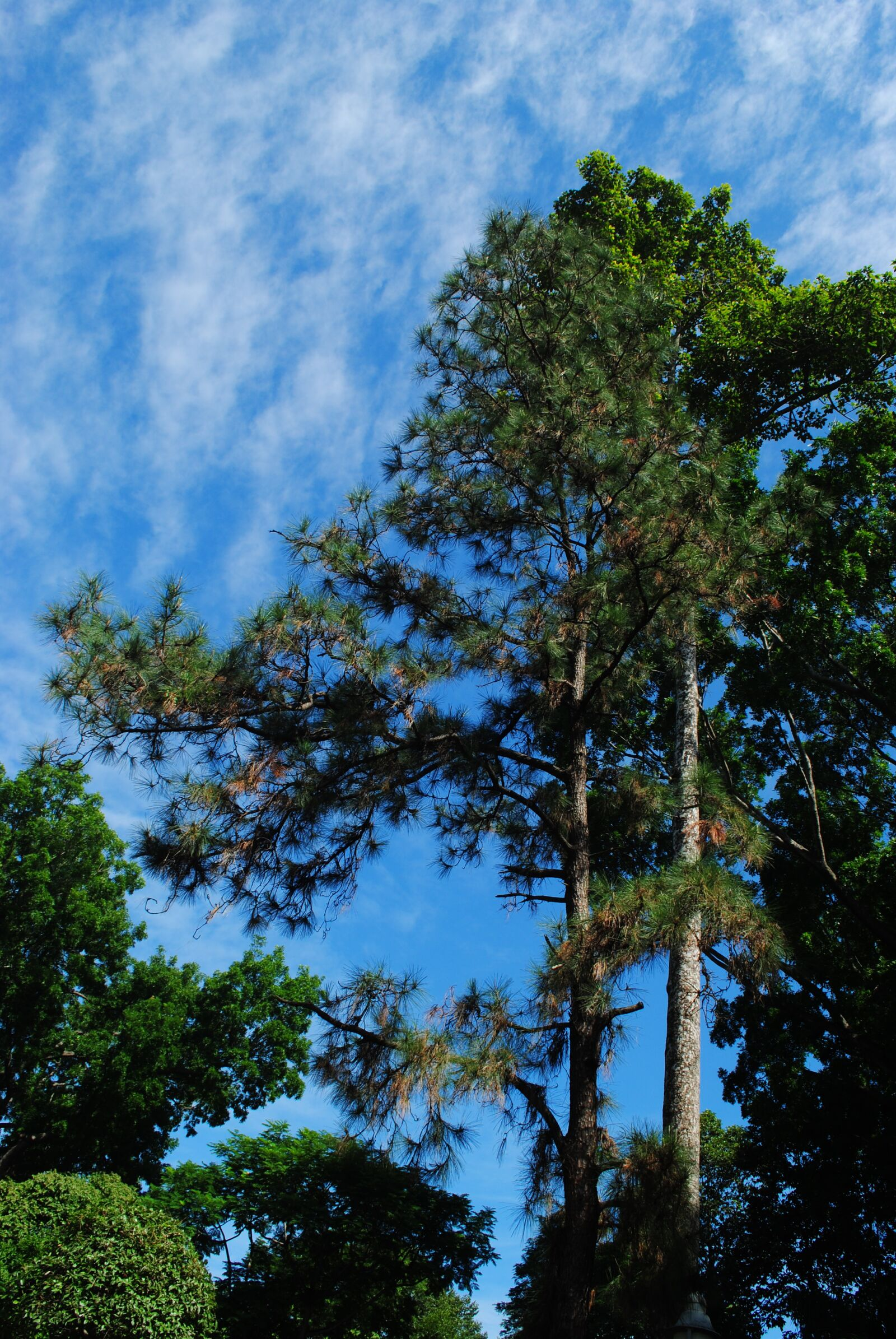"Nikon D3000 sample photo. ""Blue, sky, clouds"" photography"