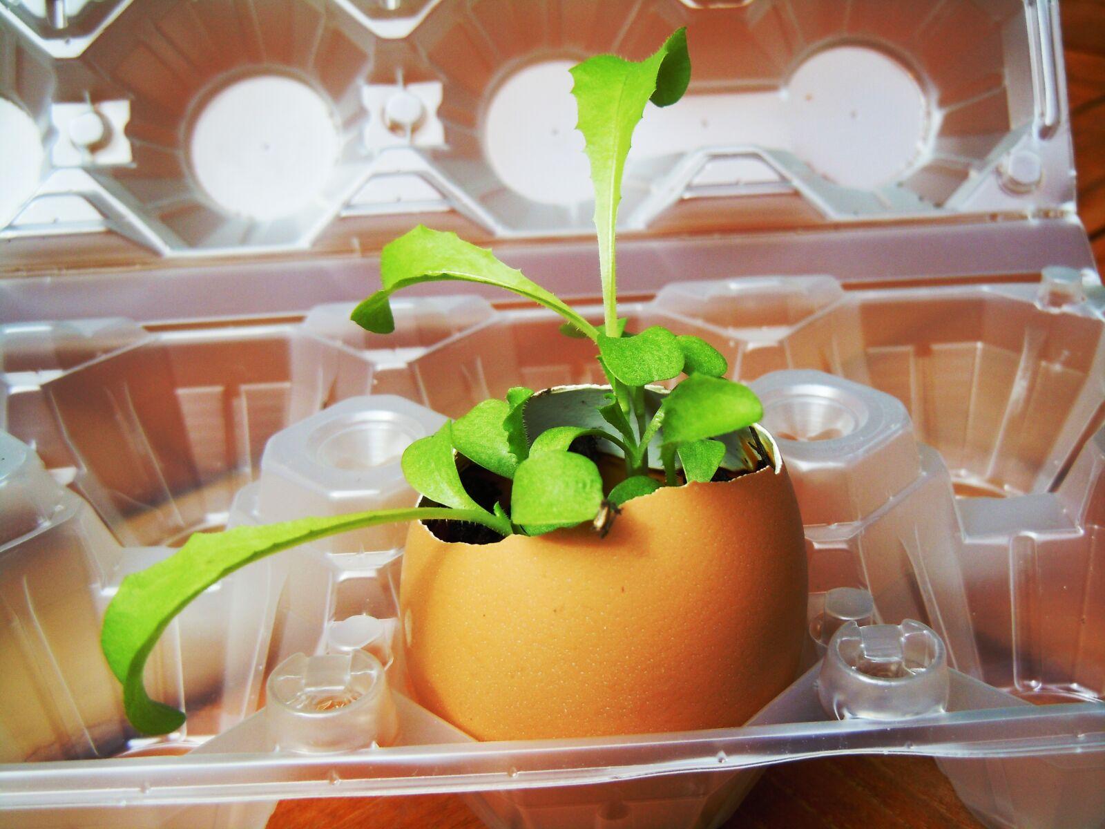 "Nikon Coolpix S8000 sample photo. ""Egg, plant, nature"" photography"