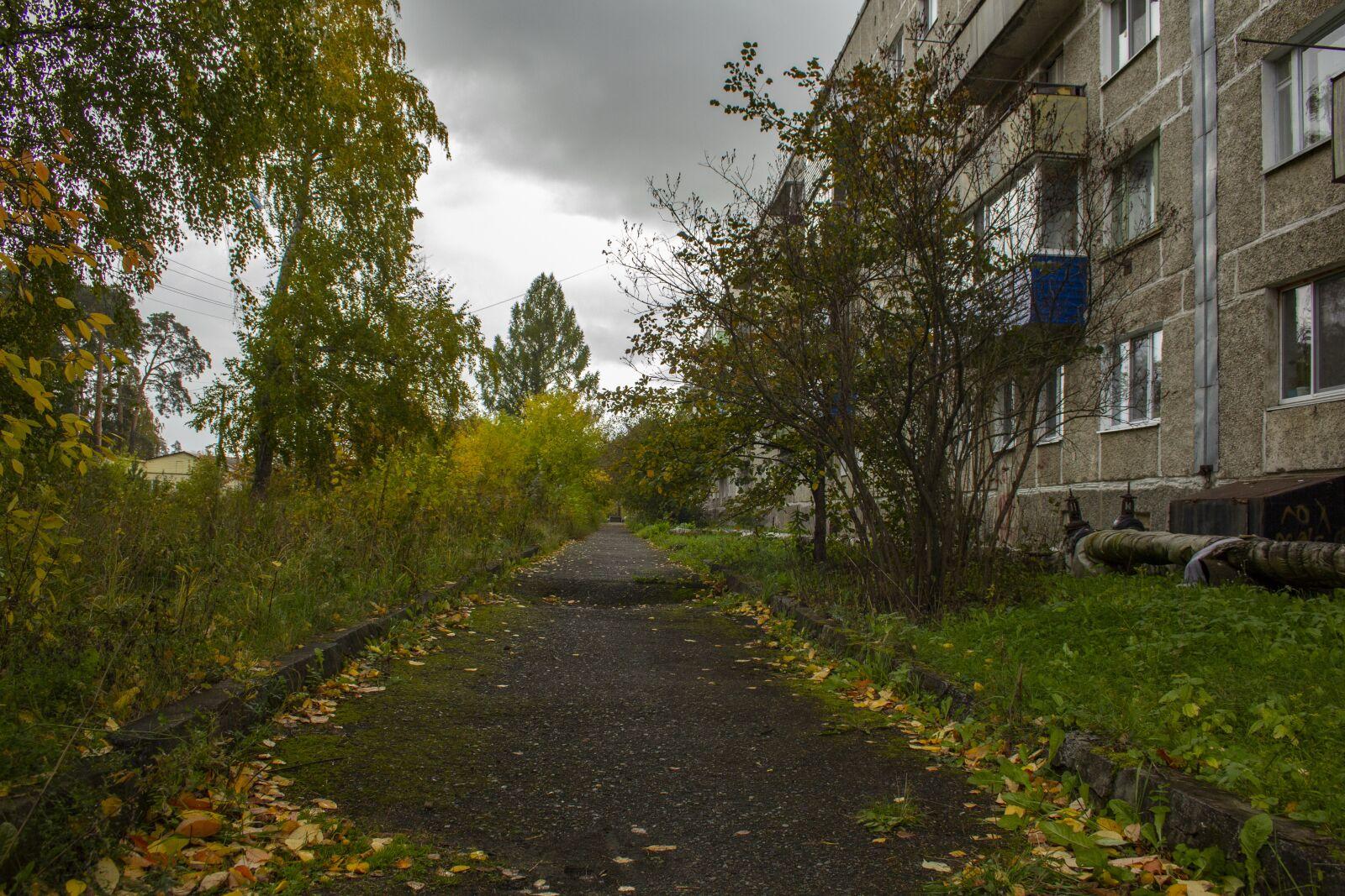 "Canon EOS 60D sample photo. ""Yard, sidewalk, house"" photography"