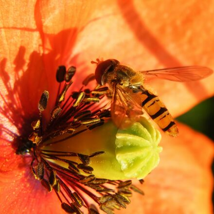 blossom, bloom, red, Fujifilm FinePix S8100fd