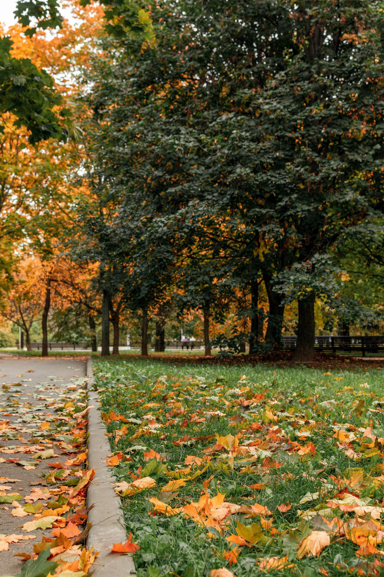"Nikon D3200 sample photo. ""Autumn, leaves, october"" photography"