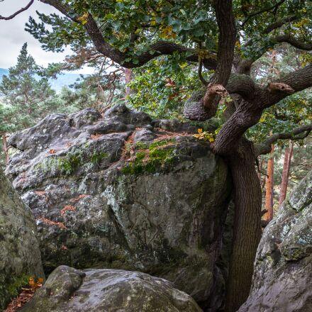 oak, rock, devil's wall, Samsung NX300M