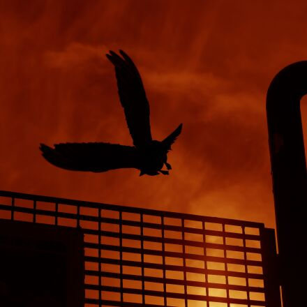 sunset, birds, nature, Samsung NX500