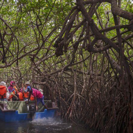mangrove, sri lanka, forest, Panasonic DMC-GH3