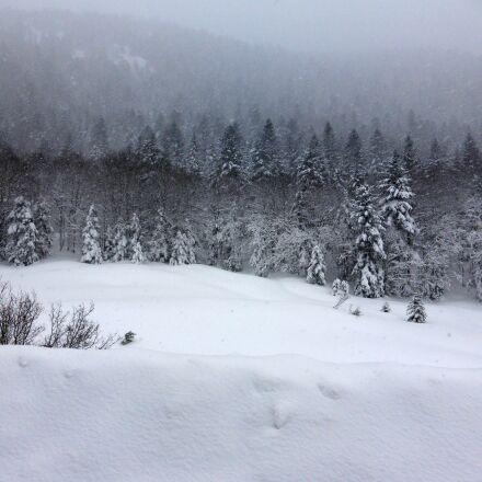snow, forest, trees, Panasonic DMC-TZ40