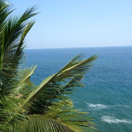 palm tree, blue sky, Panasonic DMC-TS2