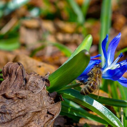 bee, flower, green, Pentax K-5 II S