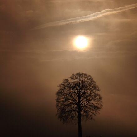 tree, sunrise, fog, Fujifilm FinePix S4500