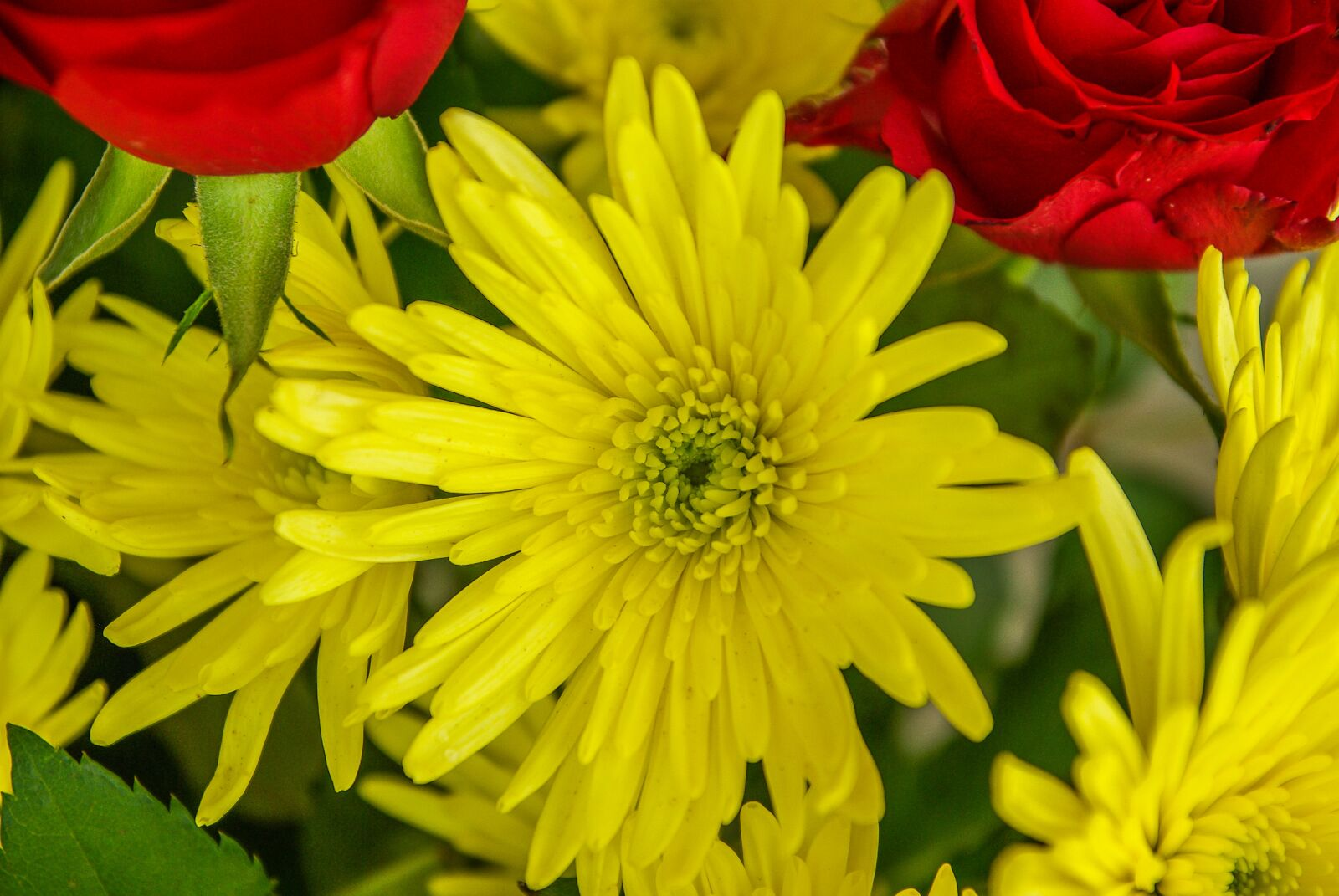 "Pentax K10D sample photo. ""Bouquet, flowers, roses"" photography"