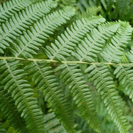 fern, nature, plant, Panasonic DMC-LZ7