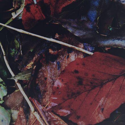 leaves, autumn, colors, Panasonic DMC-FS40