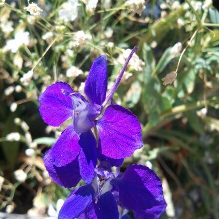 clematis spring, flower, nature, Samsung SGH-I897