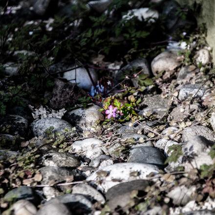 flower, house, way, Nikon D40X