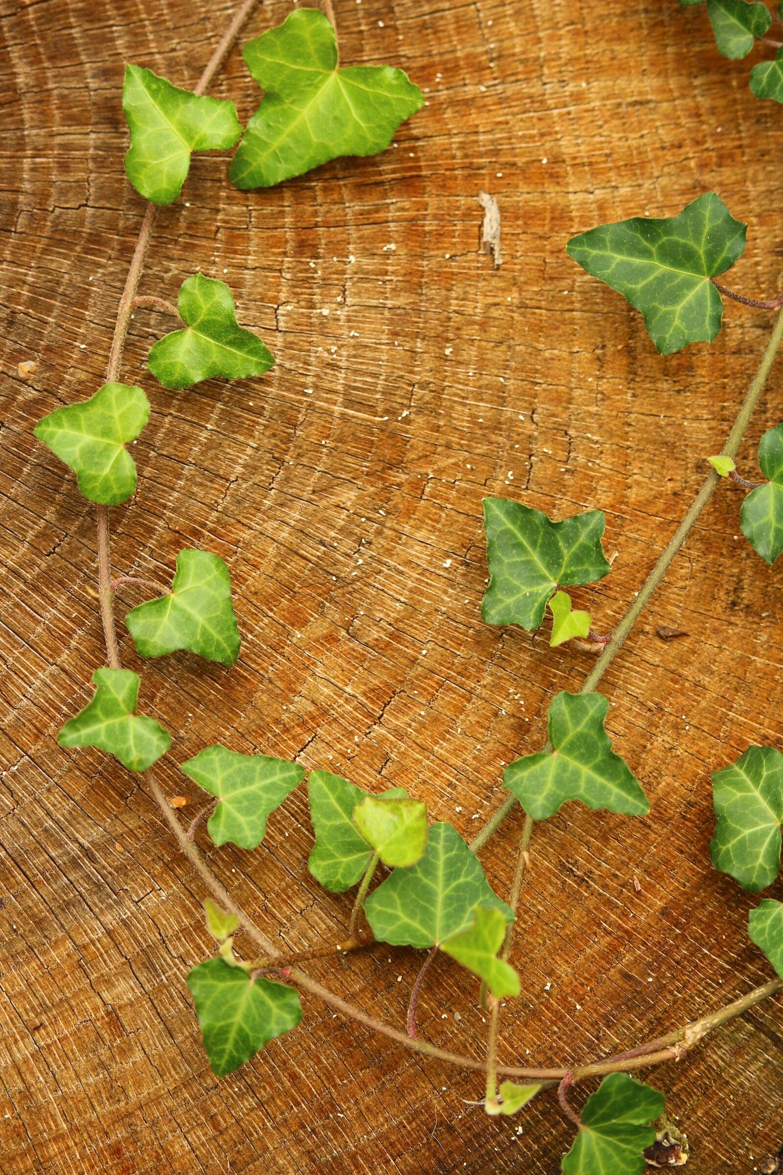 "Canon EOS 100D (EOS Rebel SL1 / EOS Kiss X7) sample photo. ""Ivy, wood, log"" photography"