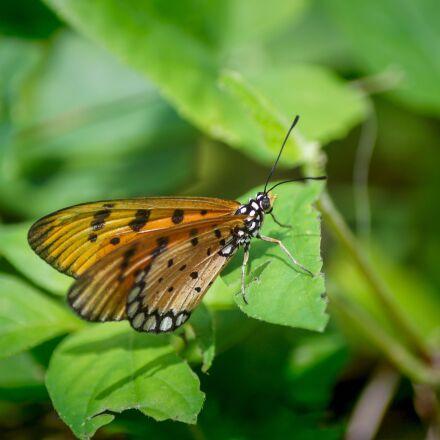 singapore coney island, butterfly, Sony SLT-A33