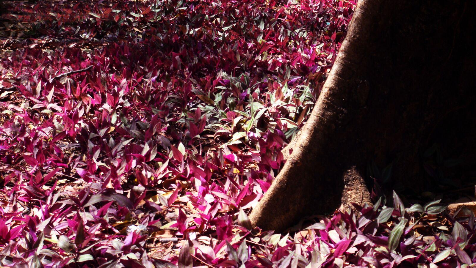 "Sony DSC-T300 sample photo. ""Jardim, garden, outono"" photography"