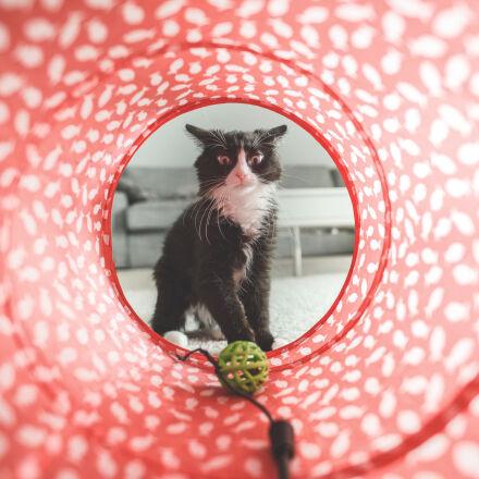 animals, cat, pets, Nikon D610