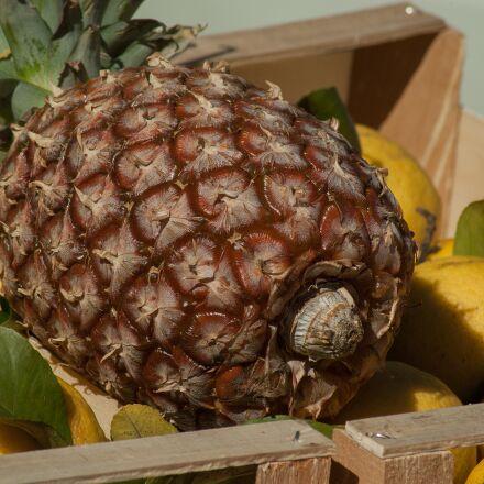 pineapple, fruit, lemons, Pentax K10D