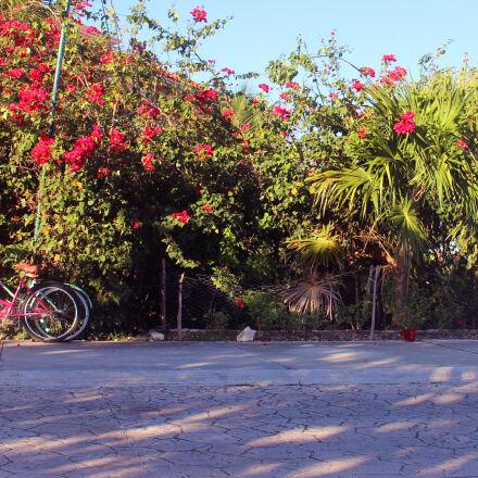bicycle, bike, Canon EOS REBEL T5I