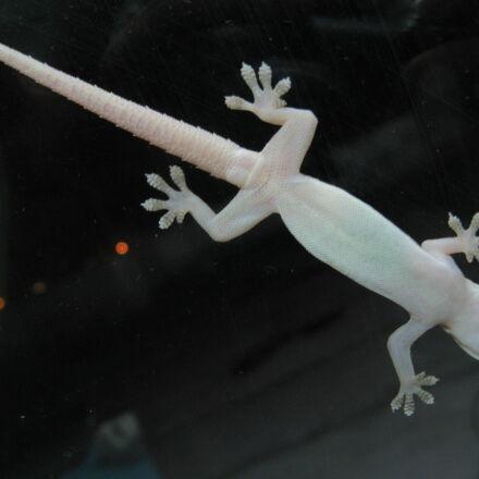 glass, salamander, Canon POWERSHOT A710 IS