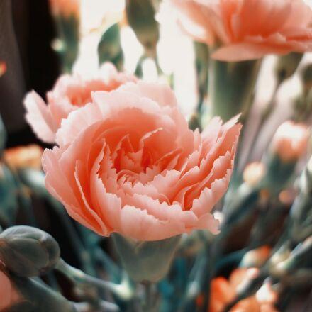 flower, garden, home garden, Panasonic DMC-FS62
