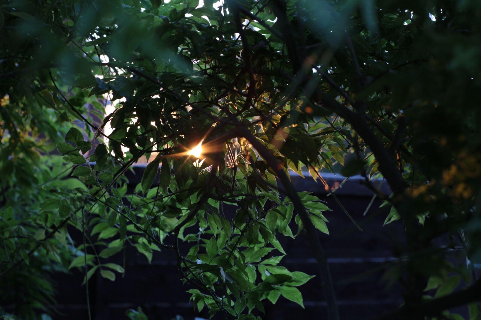 "Canon EOS 5D Mark II sample photo. ""Sunset, tree, green"" photography"