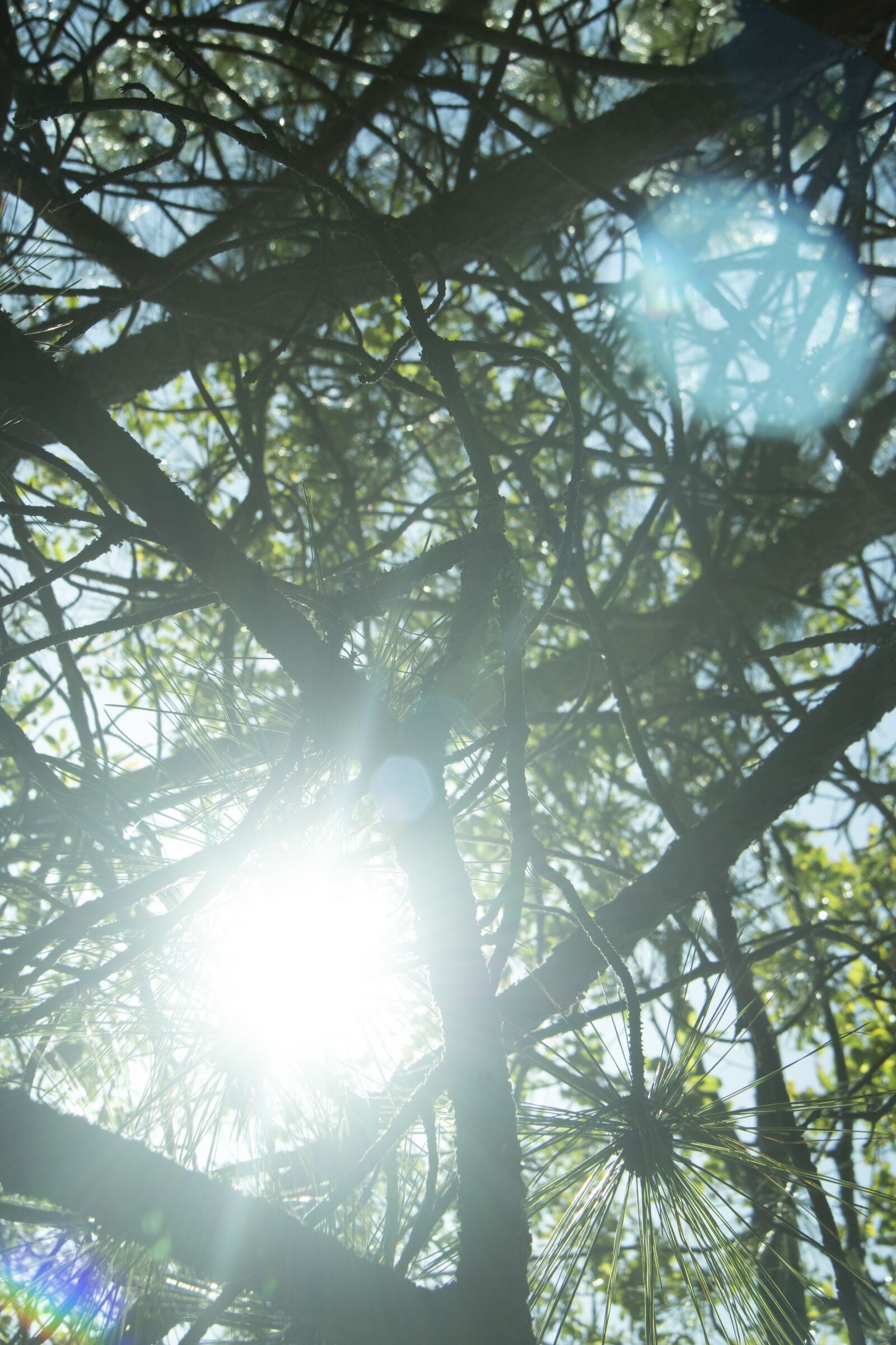 """Canon EOS 70D sample photo. """"Sunshine, trees, forest"""" photography"""