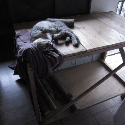 cat, wood, Canon POWERSHOT A3200 IS