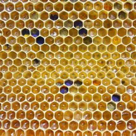 honey, comb, pollen, Nikon 1 AW1