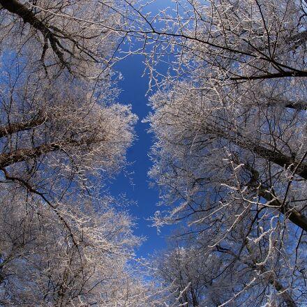 city park gotha, winter, Nikon D1H