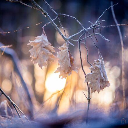 leaf, sunrise, sun, Canon EOS 6D