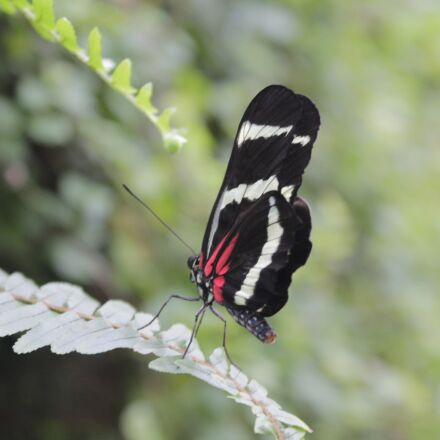 nature, insect, butterfly, Canon EOS 1100D