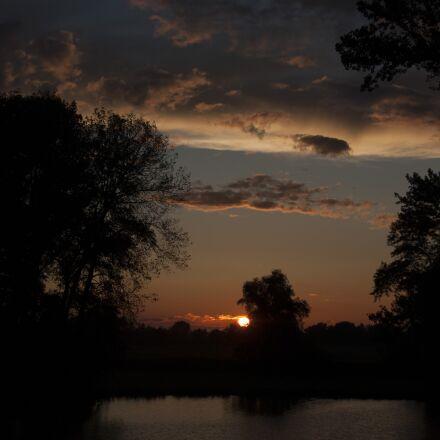 nature, sun, tree, Canon EOS 40D