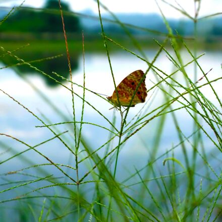 green, butterfly, insect, Sony DSC-QX100