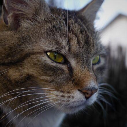 cat, animal, cat's eyes, Panasonic DMC-GH2