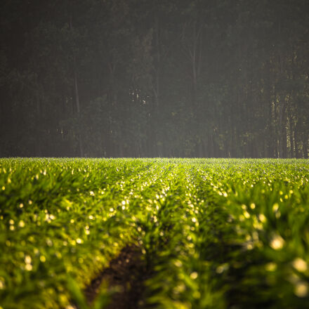 agriculture, field, forest, green, Canon EOS 5D MARK II