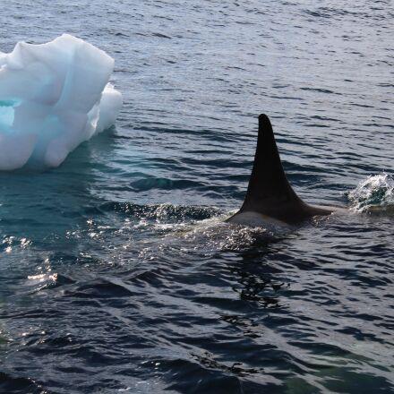 whale, mar, cold, Canon EOS REBEL T3I