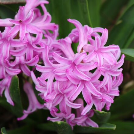 easter, lilac easter flowers, Canon EOS REBEL T6I