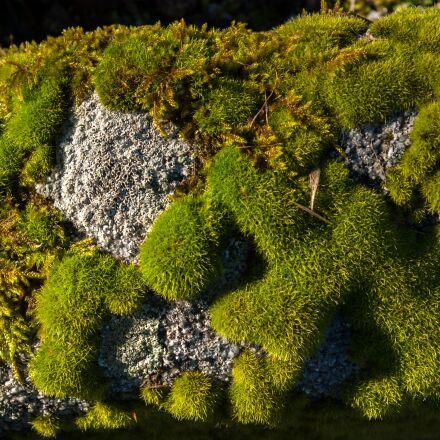 lichen, moss, stone, Pentax K10D