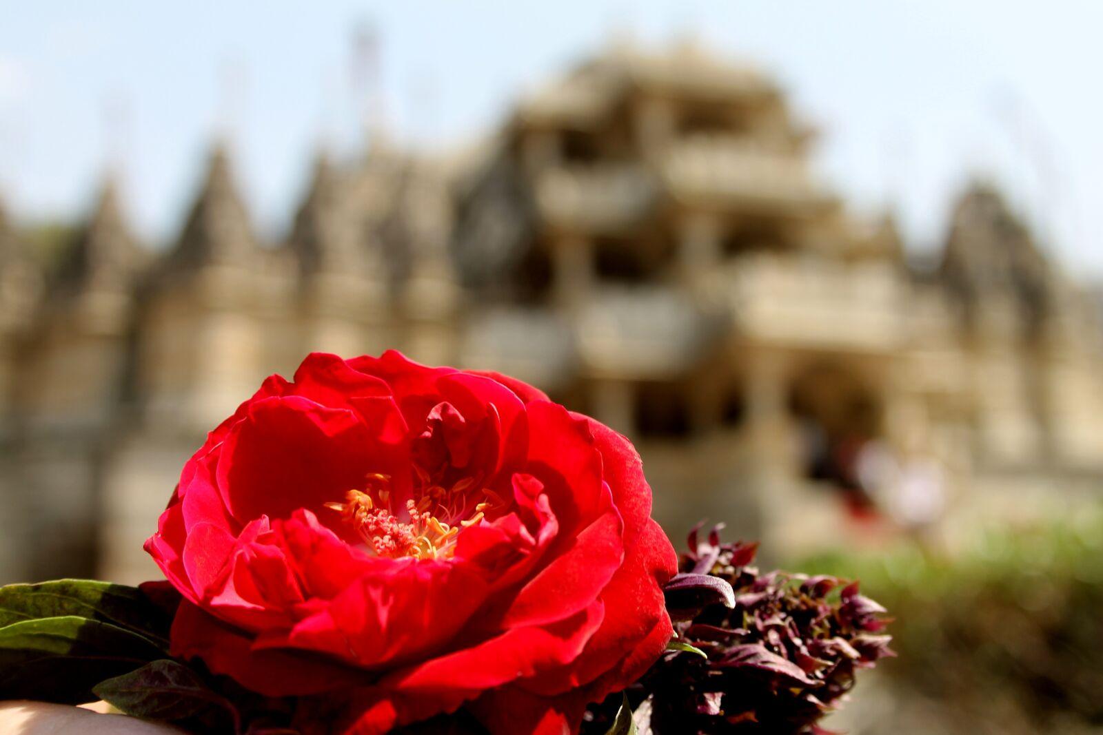 "Canon EOS 1100D (EOS Rebel T3 / EOS Kiss X50) sample photo. ""Ranakpur, india, rajasthan"" photography"