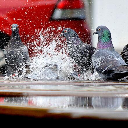 birds, color, fun, outdoors, Nikon D5300